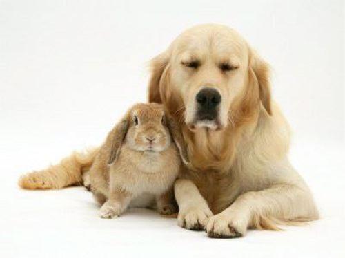 動物の噂・裏技・裏話_まるで双子のような動物2