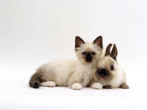 動物の噂・裏技・裏話_まるで双子のような動物3
