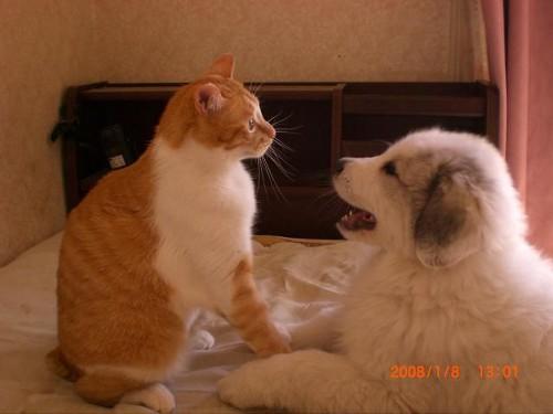動物の噂・裏技・裏話_猫から思わぬ一撃をくらった犬1
