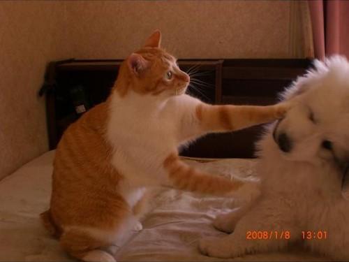 動物の噂・裏技・裏話_猫から思わぬ一撃をくらった犬3