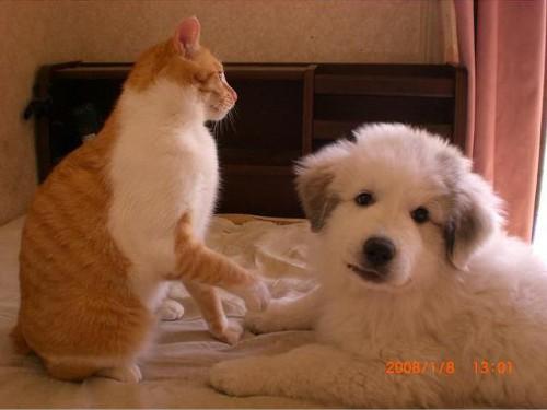 動物の噂・裏技・裏話_猫から思わぬ一撃をくらった犬4