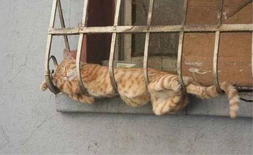 動物の噂・裏技・裏話_どこでも寝られる猫