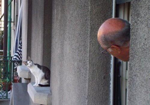 恋愛の噂・裏技・裏話_猫と目が合う老人