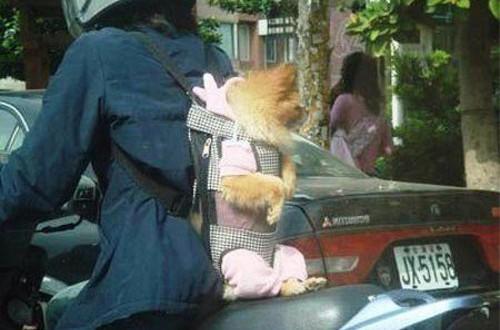 動物の噂・裏技・裏話_バイクの背中に犬