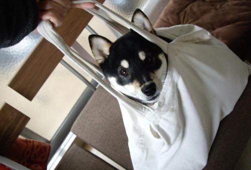 動物の噂・裏技・裏話_袋犬3