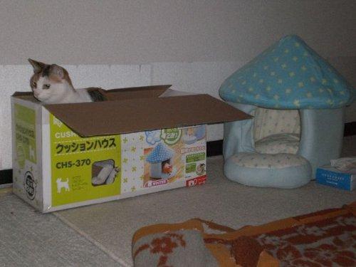 動物の噂・裏技・裏話_「確かに」と納得してしまう猫の写真