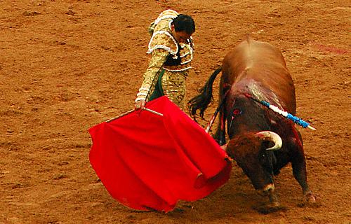 動物の噂・裏技・裏話_闘牛の牛は赤い色に反応しない