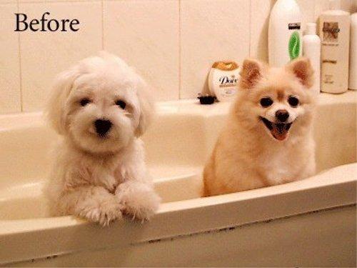 動物の噂・裏技・裏話_シャワーを浴びる前の犬