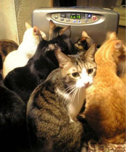 動物の噂・裏技・裏話_猫を飼うと冬場に必ず起きる事