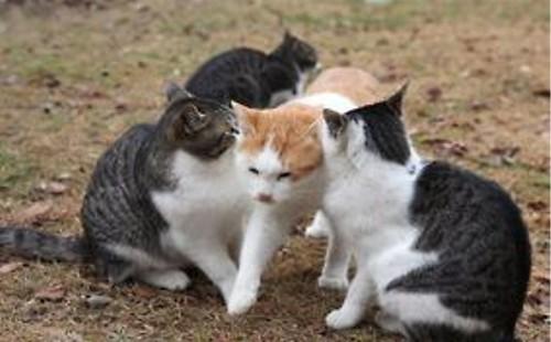 動物の噂・裏技・裏話_わざわざそこを通らなくてもと思ってしまう猫