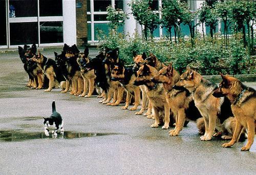動物の噂・裏技・裏話_警察犬の試験官が猫