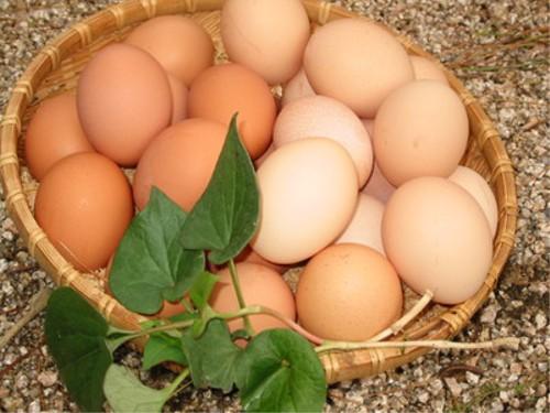 食べ物の噂・裏技・裏話_卵と玉子の違い