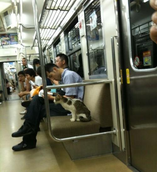 動物の噂・裏技・裏話_電車に乗る猫