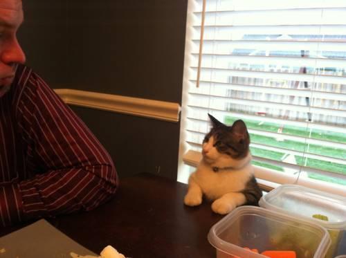 動物の噂・裏技・裏話_食事マナーの良い猫