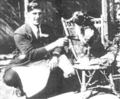 動物の噂・裏技・裏話_世界一の長寿犬「ブルーイー」