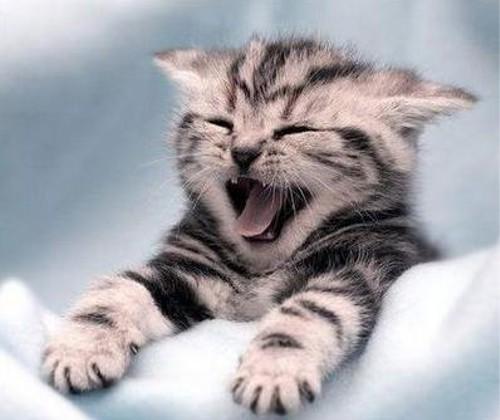 動物の噂・裏技・裏話_笑う猫