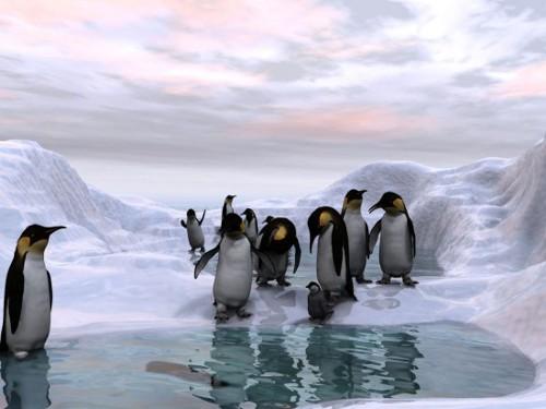 海外の噂・裏技・裏話_北極と南極どちらが寒いのか