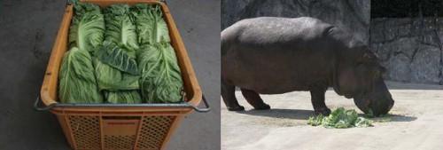 動物の噂・裏技・裏話_東武動物公園の動物達は吉野家の野菜を食べている