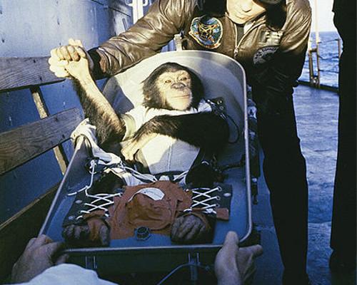 動物の噂・裏技・裏話_初めて宇宙飛行に成功したチンパンジーのハム・ザ・アストロチンプ
