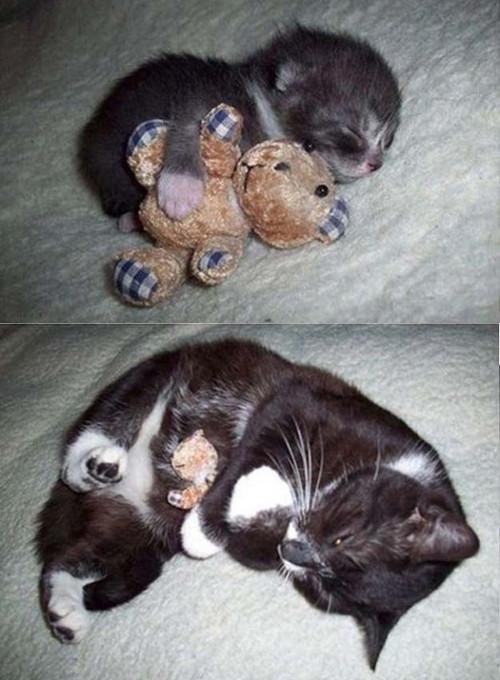 動物の噂・裏技・裏話_ぬいぐるみを抱きしめる猫
