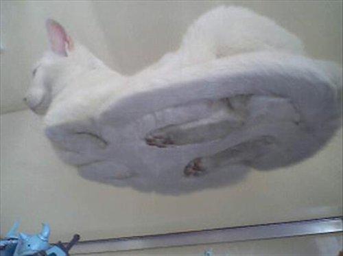 動物の噂・裏技・裏話_猫を下から見たらこうなっていた