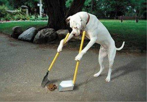 動物の噂・裏技・裏話_自分で後片付けする犬