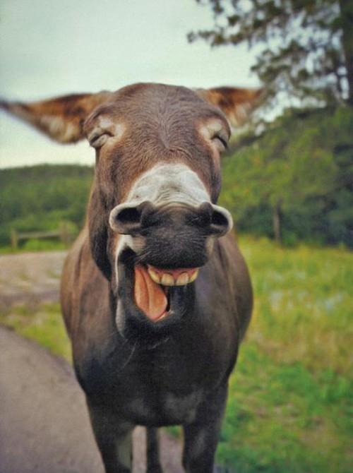 動物の噂・裏技・裏話_ものすごい笑顔のロバ
