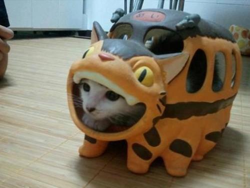 漫画・アニメ・キャラクターの噂・裏技・裏話_ネコバスと猫のコラボ