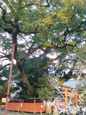 龍田神社2