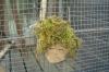 頭髪みたいな苔