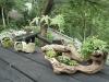 リマーニ 盆栽
