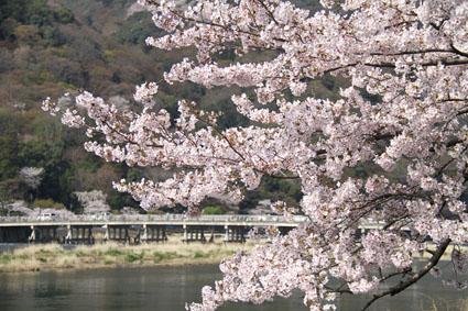 桜満開の嵐山