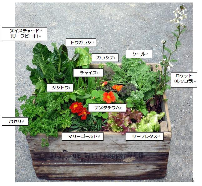 樽井造園ブログ