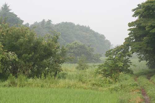 朝靄の谷津