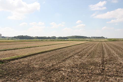 稲刈り後の田