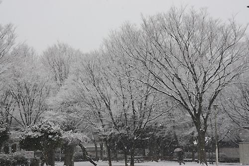 天王台西公園の雪景色