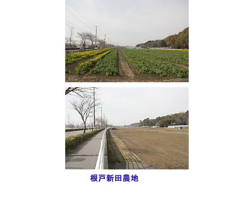 根戸新田地区農地