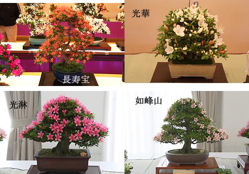 01我孫子さつき花季展示会5.jpg