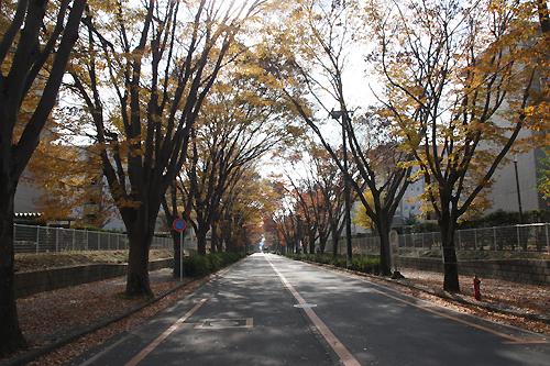 湖北台けやき通り.jpg