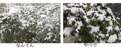 0.初雪3.jpg