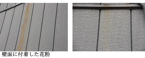 0.杉花粉4.jpg