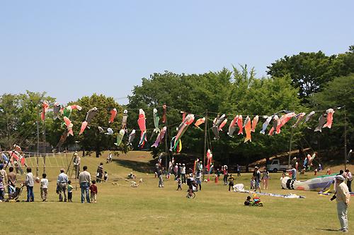 中央公園鯉のぼり1.jpg