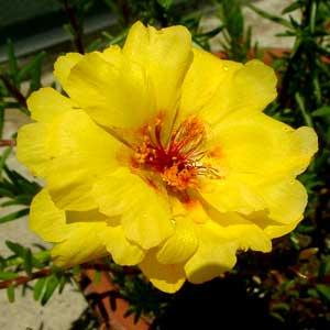 四番目のお花