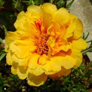 五番目のお花