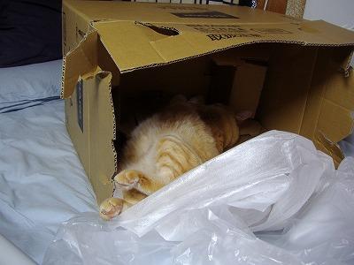 箱で夜寝2