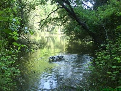 森で水浴び