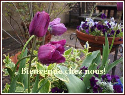 花盛りの庭です・・・