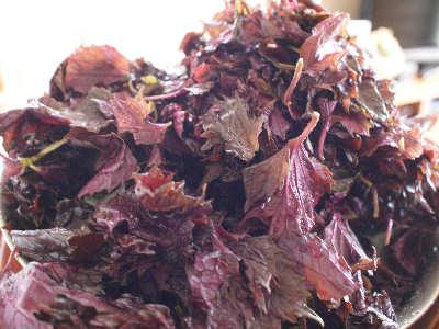 紫蘇の葉を取ります