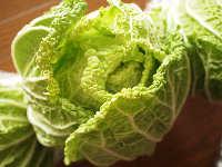 無農薬のきれいな白菜