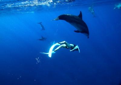 Ayano & Dolphin